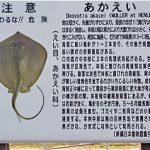 ☆GWは、ふなばし三番瀬海浜公園で潮干狩り&BBQ☆