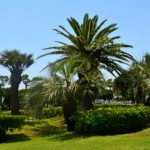 ☆ふなばし三番瀬海浜公園に咲く珍しい植物☆