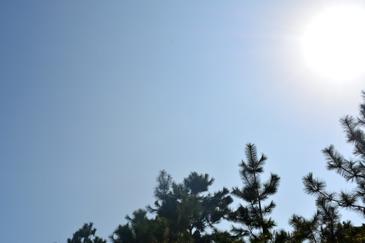 ☆ふなばし三番瀬海浜公園で楽しい週末を☆