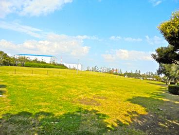 キレイな芝生広場