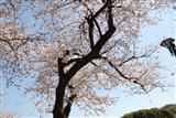 和田堀公園 バーベキュー